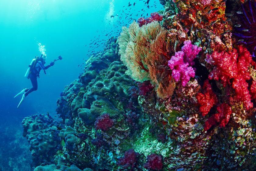 راه اندازی کمپین حفاظت از اقیانوس در تایلند