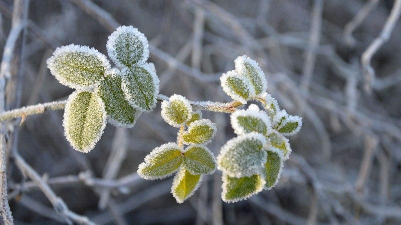 احتمال یخ زدگی محصولات کشاورزی در بعضی مناطق کشور