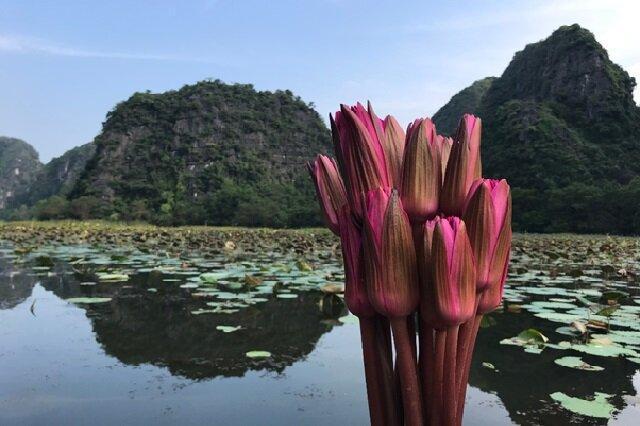 ویتنام نگین گردشگری جنوب شرق آسیا