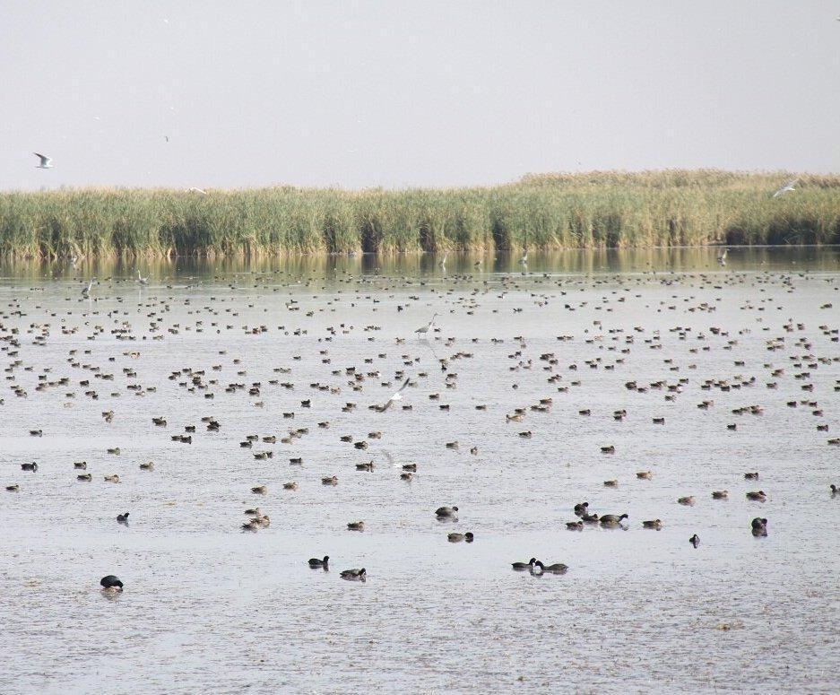 زیستگاه های آبی آذربایجان غربی میزبان 70 هزار بال پرنده شد