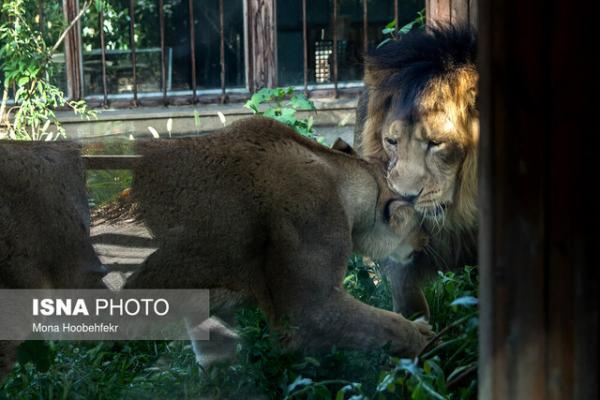 حضور کمرنگ دام پزشک متخصص حیات وحش در باغ وحش ها