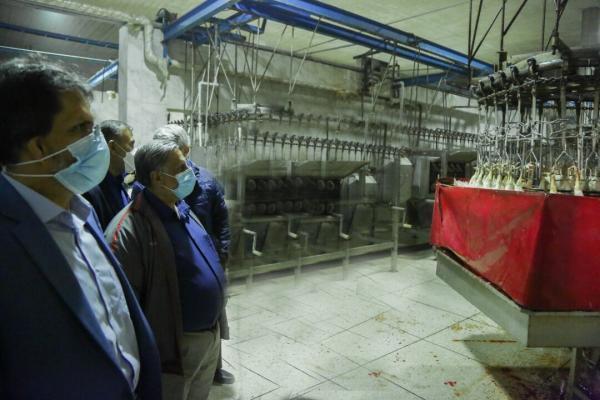 خبرنگاران 300 هزار قطعه مرغ در چهارمحال و بختیاری آماده کشتار است