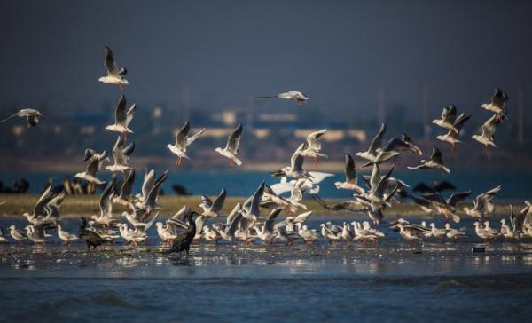 عبور پر خطر پرندگان مهاجر دنیا از فراز ایران