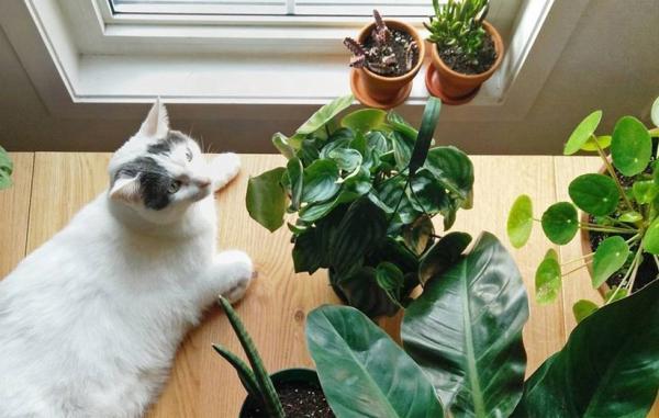 10 گیاه آپارتمانی سمی که برای بچه ها و حیوانات خانگی خطرناکند