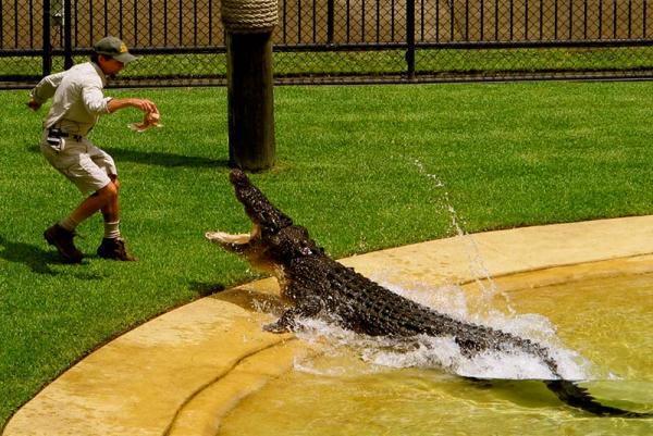 معرفی بهترین باغ وحش های استرالیا